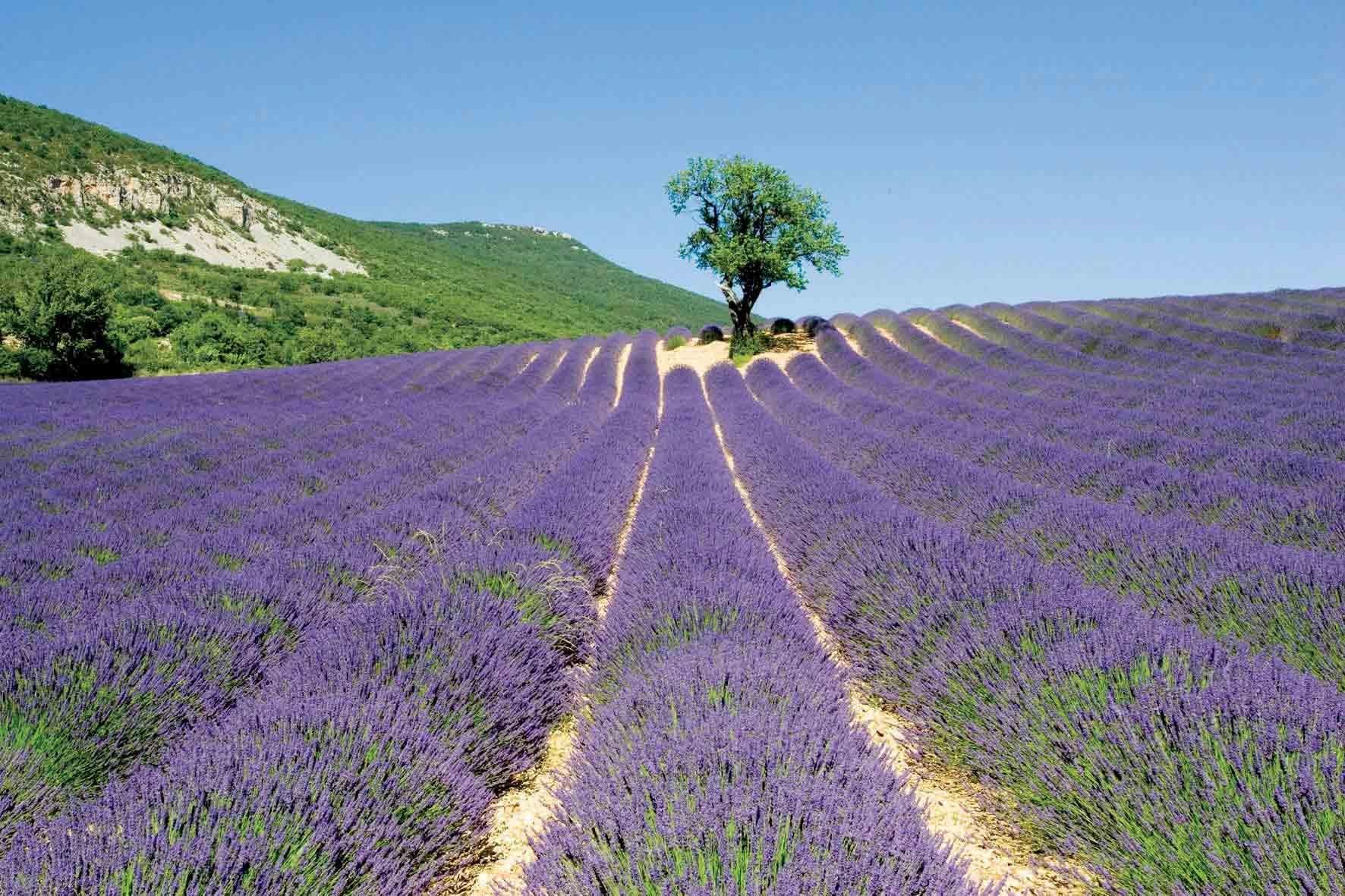 Les Aigui 232 Res En Provence Maison Et Table D H 244 Tes De Charme